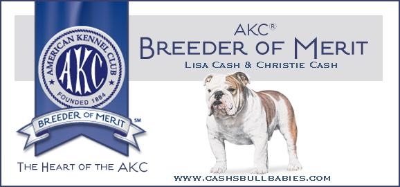 Sires Akc Champion Bulldog Sires Champion Sired Bulldogs